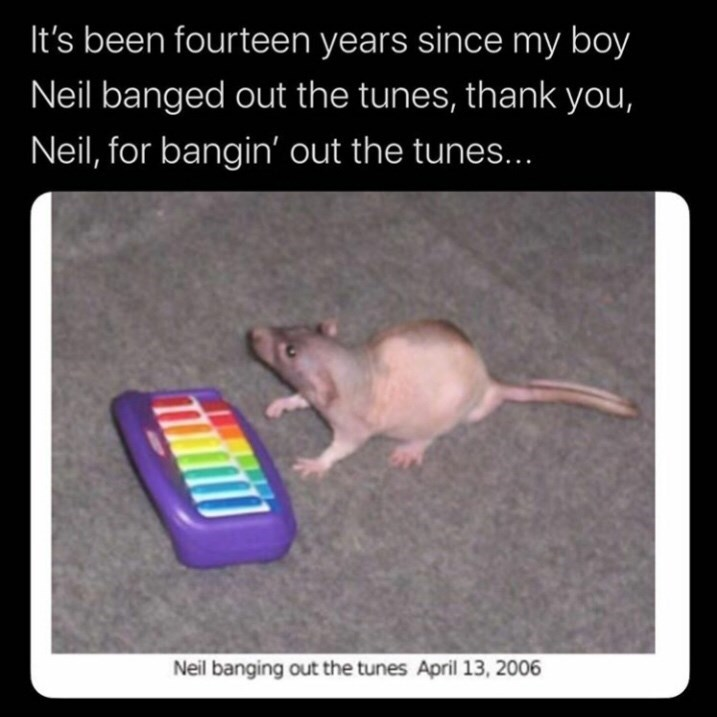 Rat - It's been fourteen years since my boy Neil banged out the tunes, thank you, Neil, for bangin' out the tunes... Neil banging out the tunes April 13, 2006