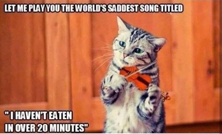 """Cat - LET ME PLAY YOU THE WORLD'S SADDEST SONG TITLED """"I HAVEN'T EATEN IN OVER 20 MINUTES"""""""