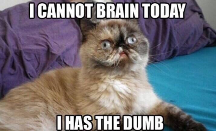 Cat - I CANNOT BRAIN TODAY I HAS THE DUMB