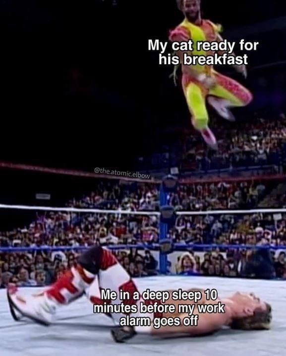 Professional wrestling - My cat ready for his breakfast @the.atomic.elbow Me in a deep sleep 10 minutes before my work alarm goes off