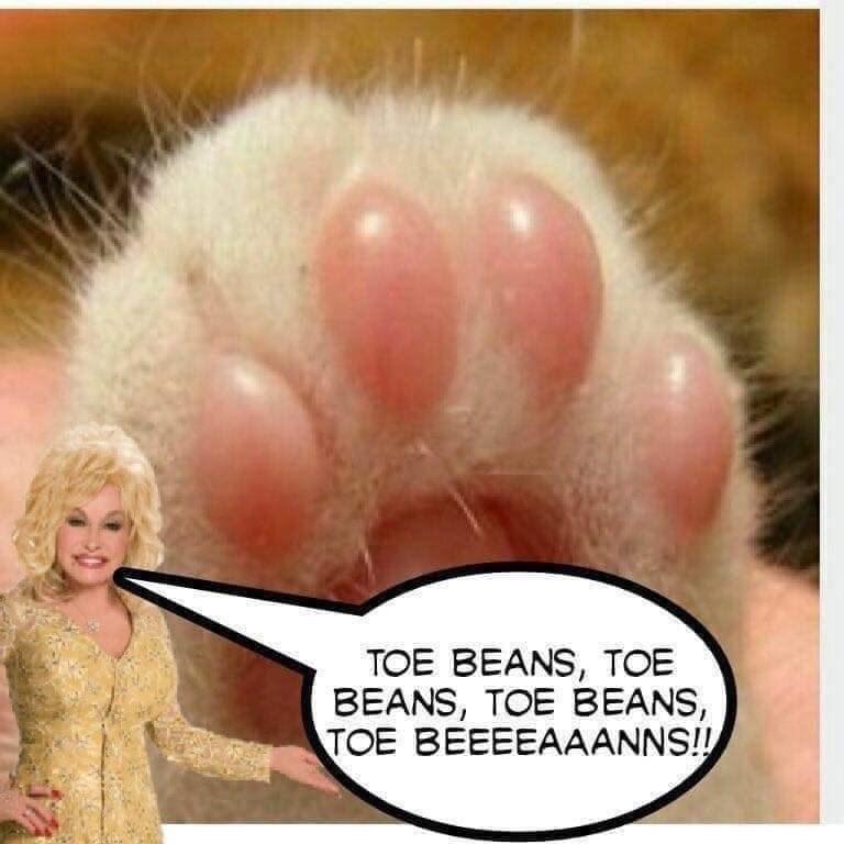 Nose - TOE BEANS, TOE BEANS, TOE BEANS, TOE BEEEEAAANNS!