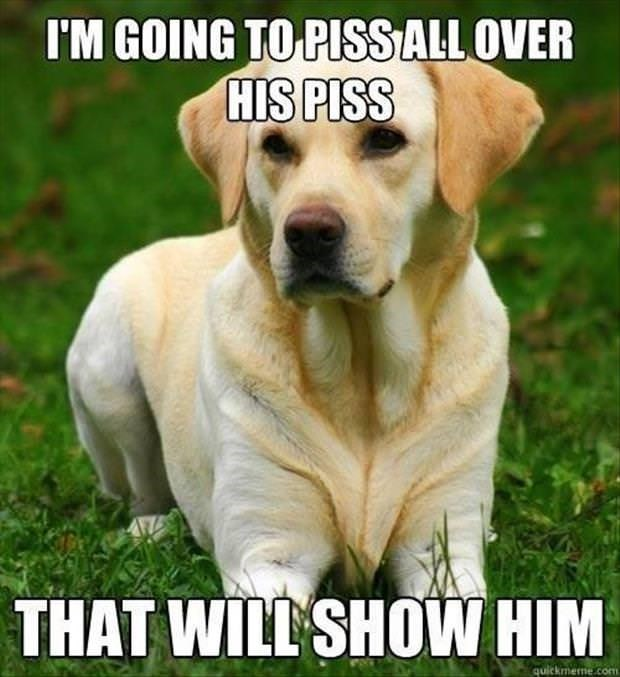 Dog - I'M GOING TO PUISS ALL OVER HIS PISS THAT WILL SHOW HIM quickmerme com