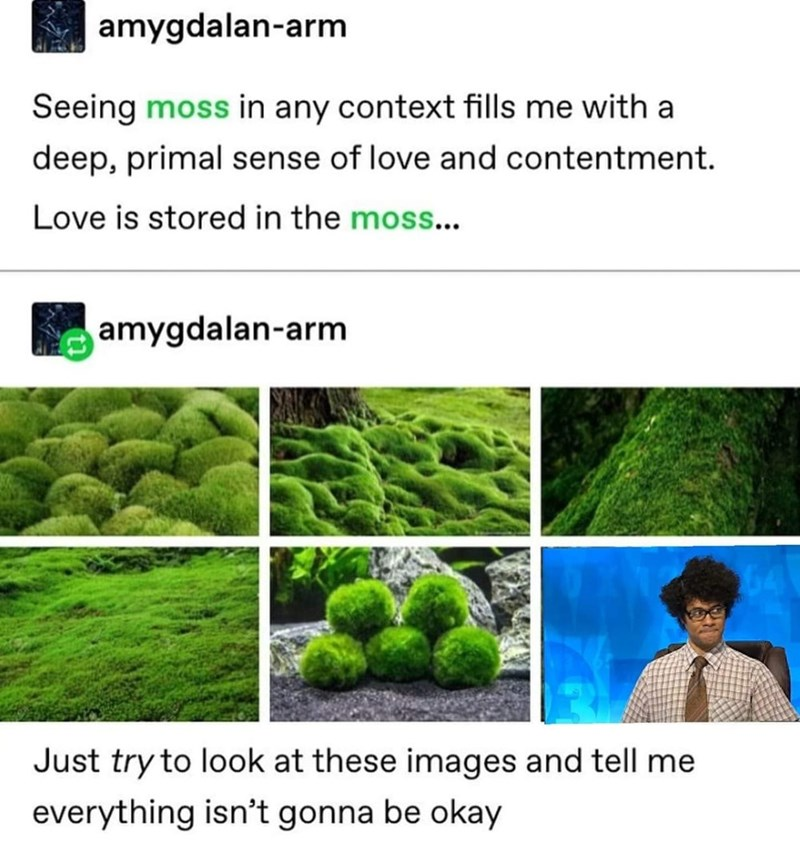 Green - amygdalan-arm Seeing moss in any context fills me with a deep, primal sense of love and contentment. Love is stored in the moss... amygdalan-arm Just try to look at these images and tell me everything isn't gonna be okay