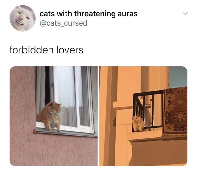 Cat - cats with threatening auras @cats_cursed forbidden lovers