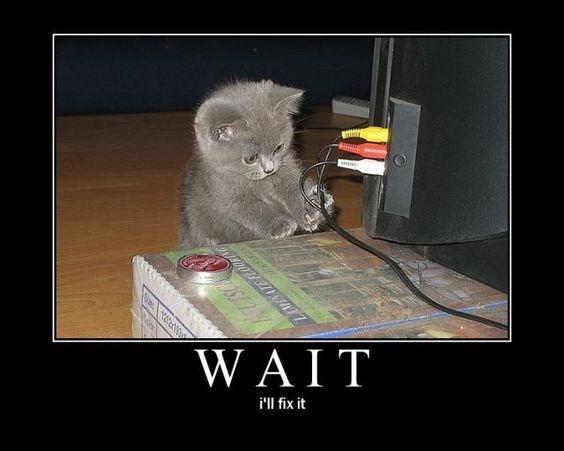 Cat - WAIT i'll fix it