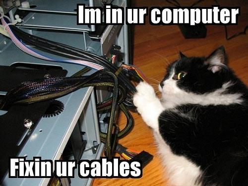 Cat - Im in ur computer Fixin ur cables
