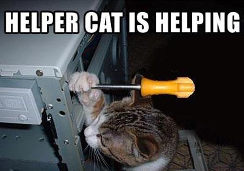 Cat - HELPER CAT IS HELPING