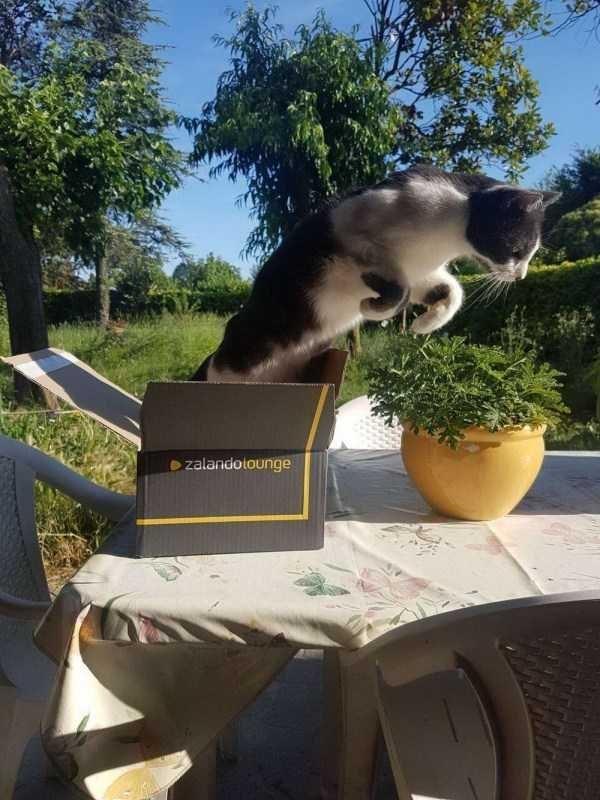 Cat - zalandolounge