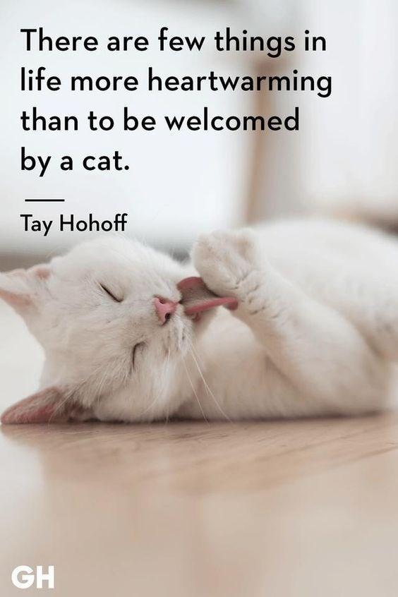There are few things in life more heartwarming than to be welcomed by a cat. Tay Hohoff quote white cat licking its paw