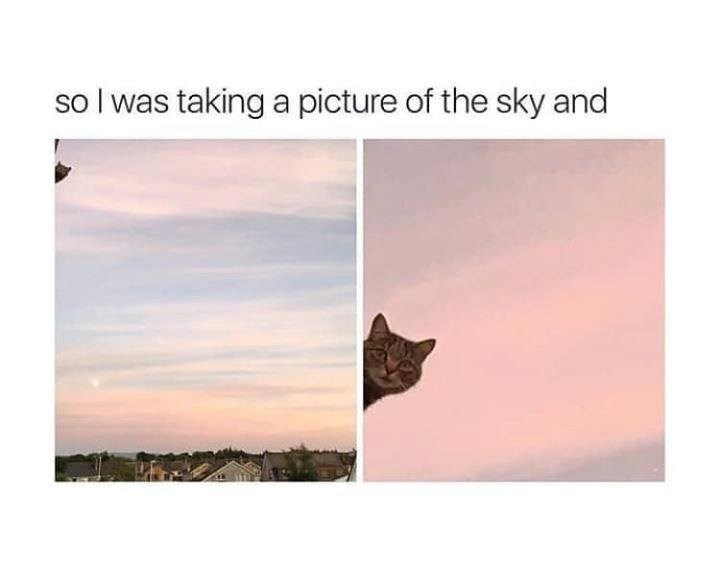 so I was taking a picture of the sky and cat peeking into frame of pink sunset