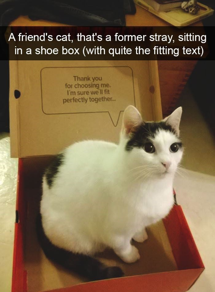 A friend's cat, that's a former stray, sitting in a shoe box (with quite the fitting text) Thank you for choosing me. I'm sure we II fit perfectly together