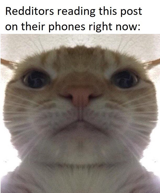 Cat - Redditors reading this post on their phones right now: