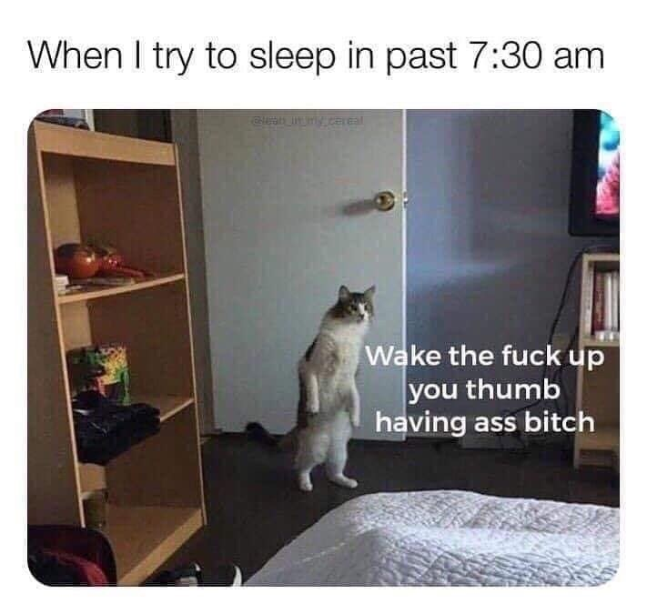 Cat - When I try to sleep in past 7:30 am y.caeal Wake the fuck up you thumb having ass bitch