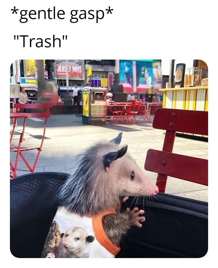 "Companion dog - *gentle gasp* ""Trash"" JERSEY ROYS SPa CHAPE"