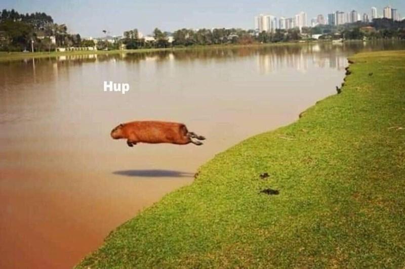 Capybara - Hup