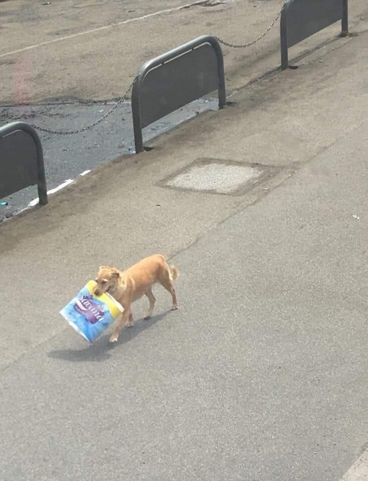 Dog - Savana