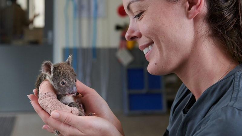 Baby koala in cast