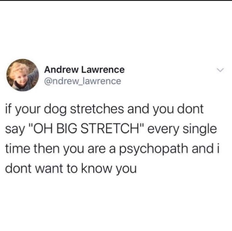 """Text - Andrew Lawrence @ndrew_lawrence if your dog stretches and you dont say """"OH BIG STRETCH"""" every single time then you are a psychopath and i dont want to know you"""