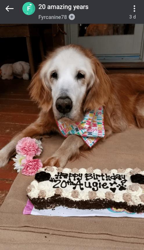 Dog - F 20 amazing years Fyrcanine78 + 3 d BHD appy Birthday 20Augie S MY S.A CHI