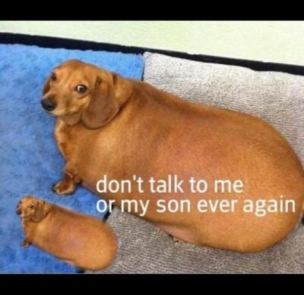Mammal - don't talk to me or my son ever again