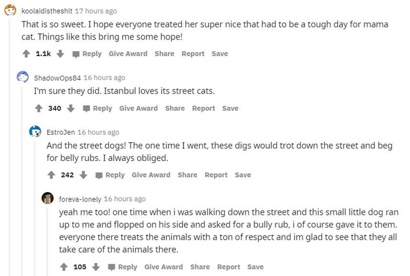 Text - koolaidistheshit 17 hours ago That is so sweet. I hope everyone treated her super nice that had to be a tough day for mama cat. Things like this bring me some hope! 1.1k Reply Give Award Share Report Save Shadowops84 16 hours ago I'm sure they did. Istanbul loves its street cats. 1 340 Reply Give Award Share Report Save EstroJen 16 hours ago And the street dogs! The one time I went, these digs would trot down the street and beg for belly rubs. I always obliged. 242 Reply Give Award Share