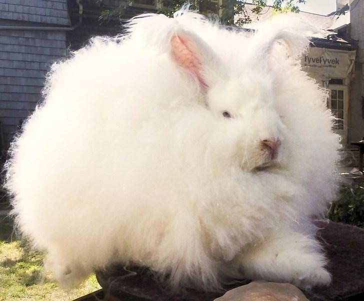 Rabbit - Tyvelyvek