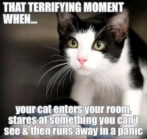 THAT TERRIFYING MOMENT WHEN your cat enters your room, stares at something you can't see then runs away in a panic