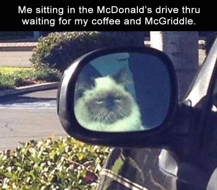 Me sitting in the McDonald's drive thru waiting for my coffee and McGriddle. reflection of a cat in the side view mirror of a car