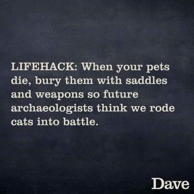LIFEHACK: When your pets die, bury them with saddles and weapons so future archaeologists think we rode cats into battle.