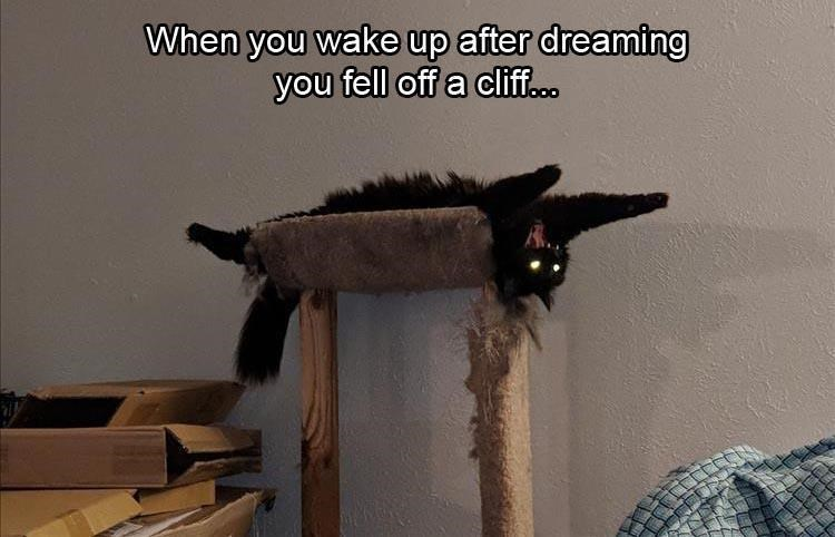 When you wake up after dreaming you fell off a cliff.. black cat with glowing eyes lying on its back on top of a cat tree