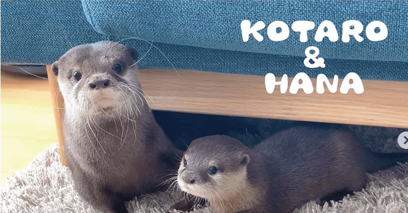 aww cute animals otters animal video funny animals animals - 9478405