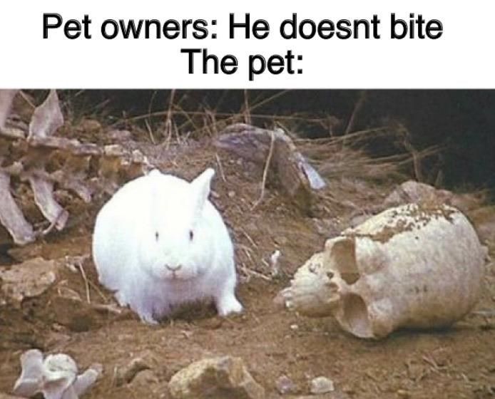 "Funny meme that reads, ""He doesn't bite; The pet: ..."" above a pic of the Rabbit of Caerbannog from Monty Python and the Holy Grail"