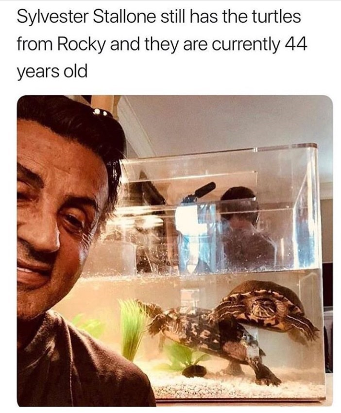 Text - Sylvester Stallone still has the turtles from Rocky and they are currently 44 years old