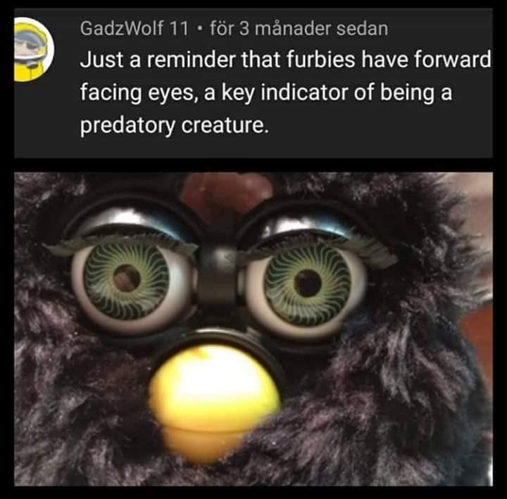 Owl - GadzWolf 11 • för 3 månader sedan Just a reminder that furbies have forward facing eyes, a key indicator of being a predatory creature.