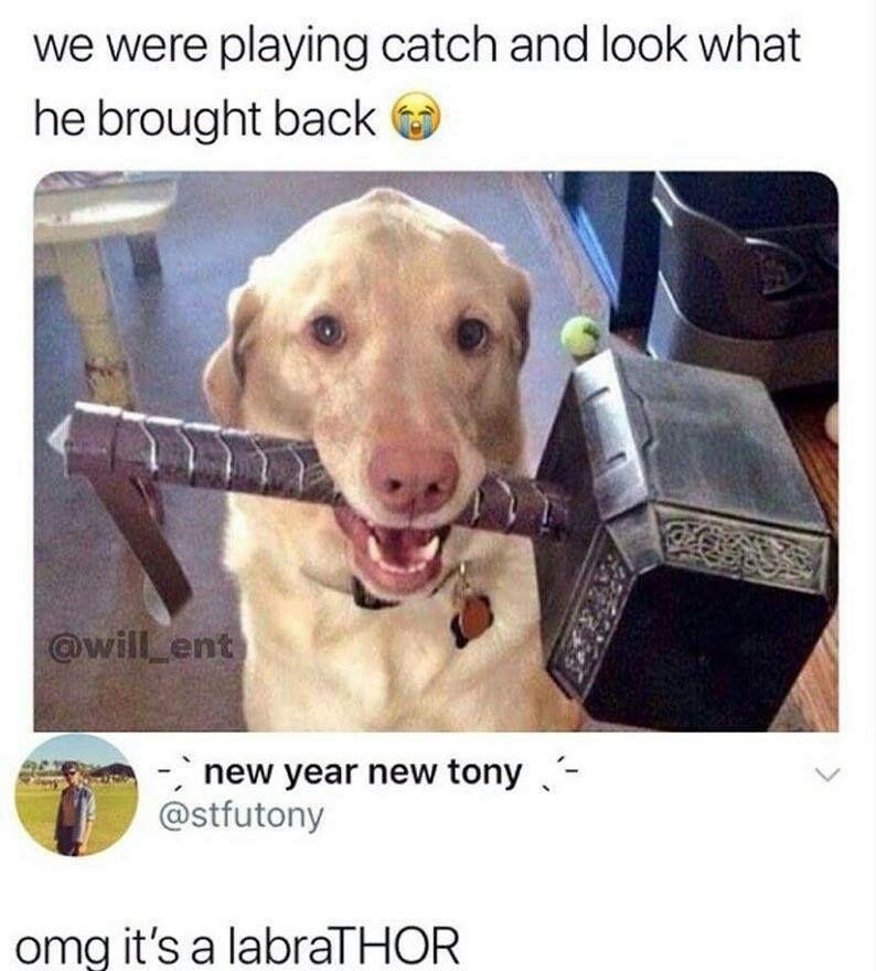 Dog - we were playing catch and look what he brought back @will ent new year new tony - @stfutony omg it's a labraTHOR