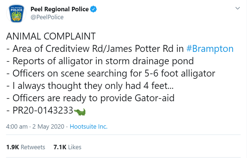 Text - PEEL REGIONAL POLICE Peel Regional Police @PeelPolice ANIMAL COMPLAINT - Area of Creditview Rd/James Potter Rd in #Brampton Reports of alligator in storm drainage pond - Officers on scene searching for 5-6 foot alligator - I always thought they only had 4 feet. - Officers are ready to provide Gator-aid - PR20-0143233- 4:00 am · 2 May 2020 · Hootsuite Inc. 1.9K Retweets 7.1K Likes