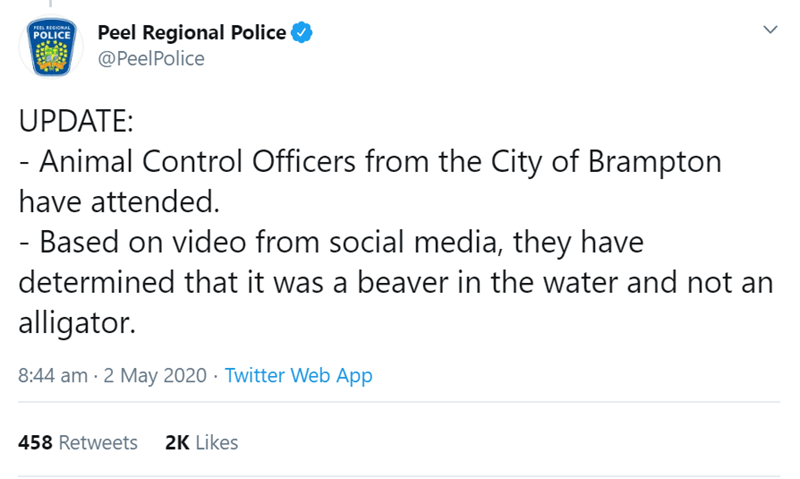 Text - Peel Regional Police @PeelPolice PEEL RECIONAL POLICE UPDATE: - Animal Control Officers from the City of Brampton have attended. Based on video from social media, they have determined that it was a beaver in the water and not an alligator. 8:44 am · 2 May 2020 · Twitter Web App 458 Retweets 2K Likes