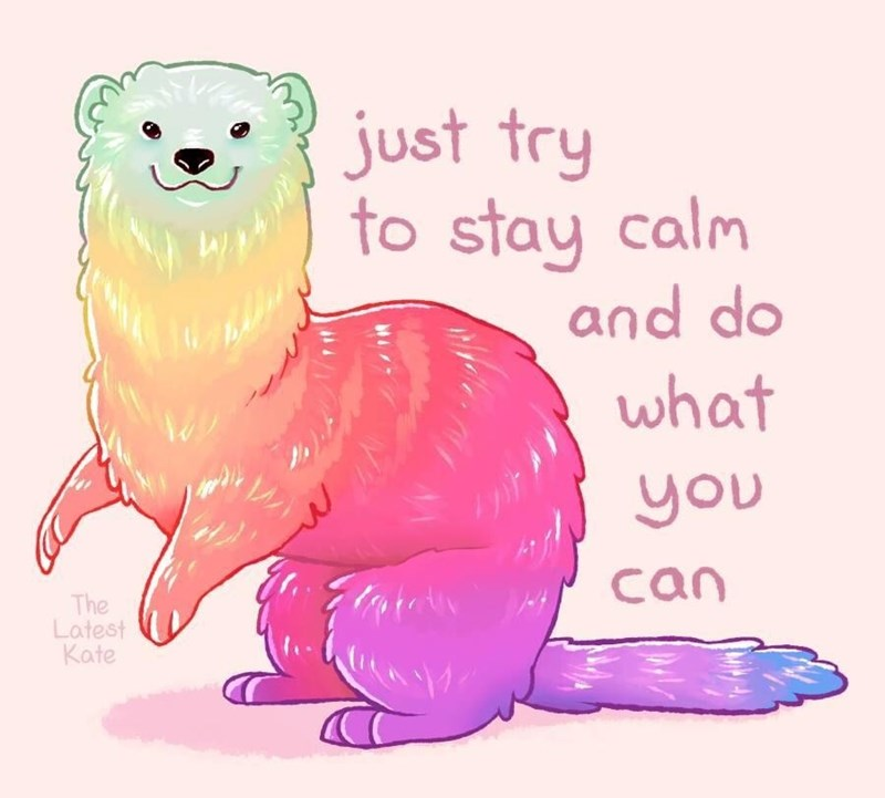 Ferret - just try to stay calm and do what you can The Latest Kate
