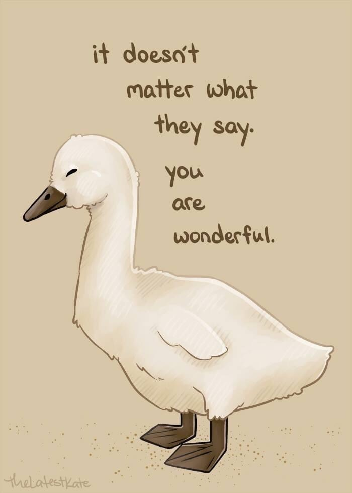 Text - Bird - it doeso't matter what they say. you are wonderful. thelatestkate