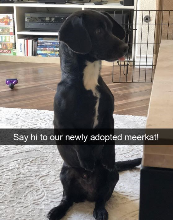 Dog - FE NOPOLY Say hi to our newly adopted meerkat! Resort