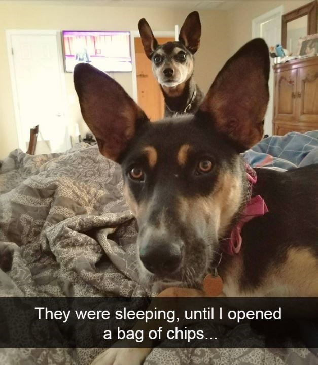 Dog - They were sleeping, until I opened a bag of chips...