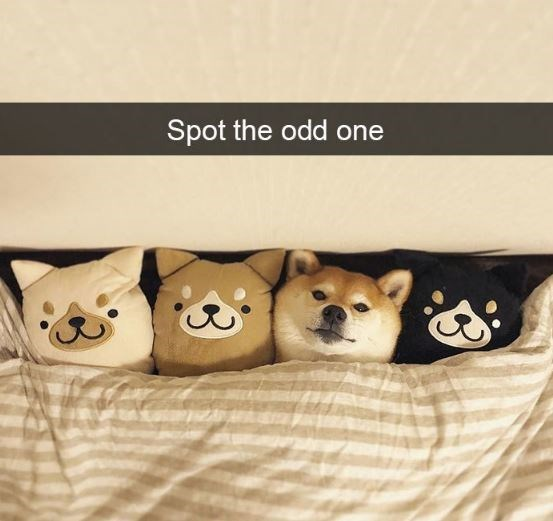 Canidae - Spot the odd one