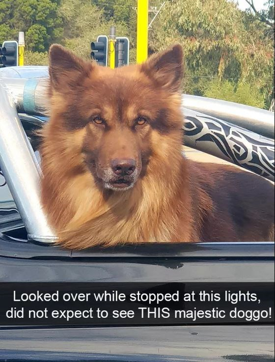 Dog - Looked over while stopped at this lights, did not expect to see THIS majestic doggo!