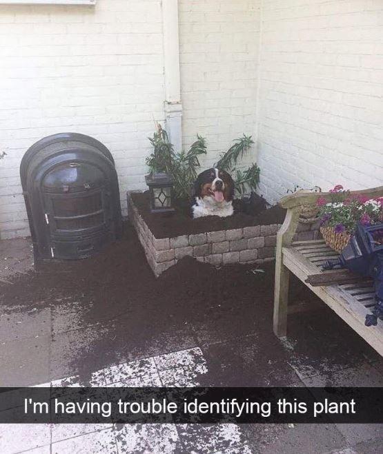 Adaptation - I'm having trouble identifying this plant