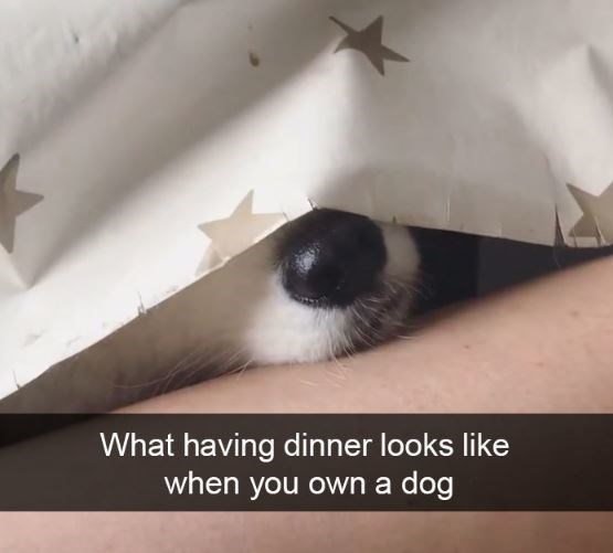 Cat - What having dinner looks like when you own a dog