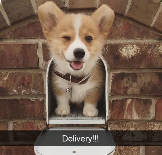 Dog - Delivery!!!