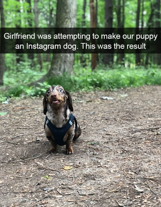 Dog - Girlfriend was attempting to make our puppy an Instagram dog. This was the result