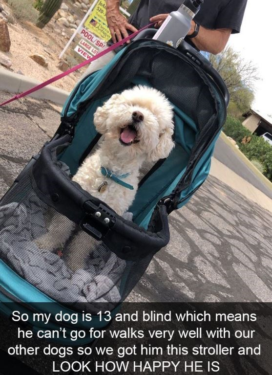 Dog - JoA 520- Tadnon Antiga POOL/SP LARGE LOT VIEW So my dog is 13 and blind which means he can't go for walks very well with our other dogs so we got him this stroller and LOOK HOW HAPPY HE IS