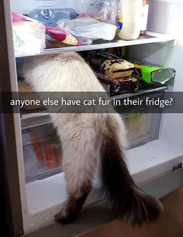 Cat - RENGITS ELLONUT anyone else have cat fur in their fridge?
