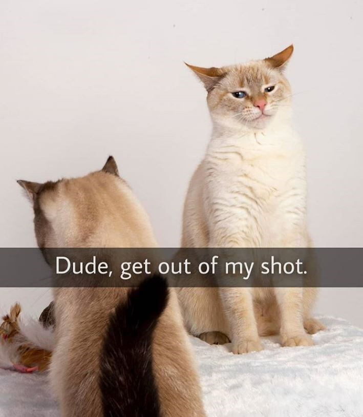 Cat - Dude, get out of my shot.